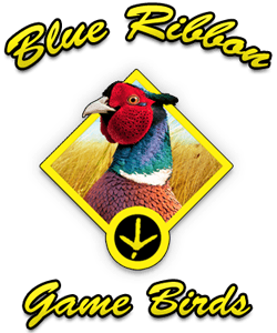 Pheasants for sale logo at blue ribbon game birds