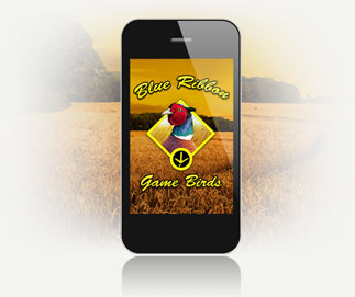 Pheasants For Sale at Blue Ribbon Game Birds Give Us A Call